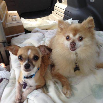 Pup Sidekicks