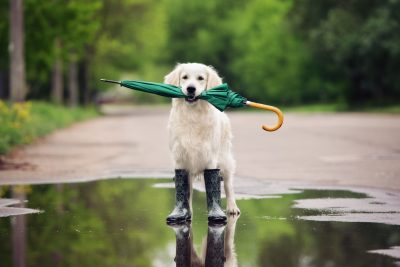 Commercial Umbrellas Protect Against Raining Litigation