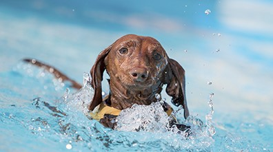 Our Top 10 Summer Safety Tips for Dogs
